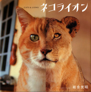 photo-book-lion03.jpg